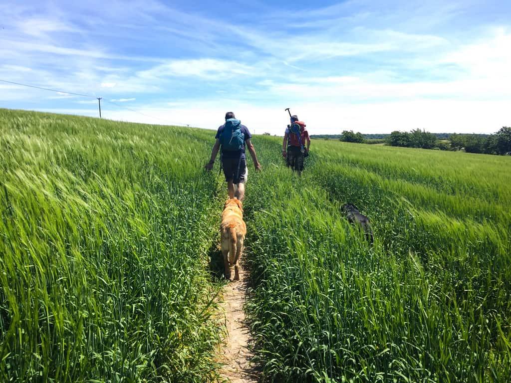 Field Report: Chanctonbury Ring ChanctonburyRing_007